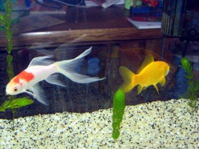 Types de bac aquarium eau froide vie l 39 aquariophilie d for Aquarium bac